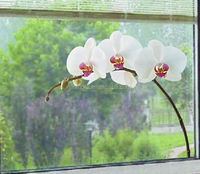 Removable window decals for kids/flower adhesive free window film/Diy pvc window sticker