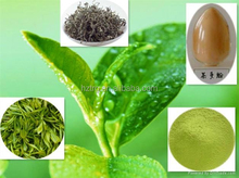 Manufacturer Supply High Quality Decaffeinated Green Tea Extract Catechin