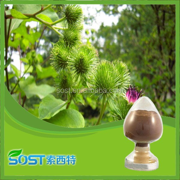 china supply burdock root extract