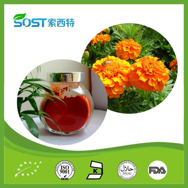 Chinese Plant Powder Marigold Flower Extract Xanthophyll
