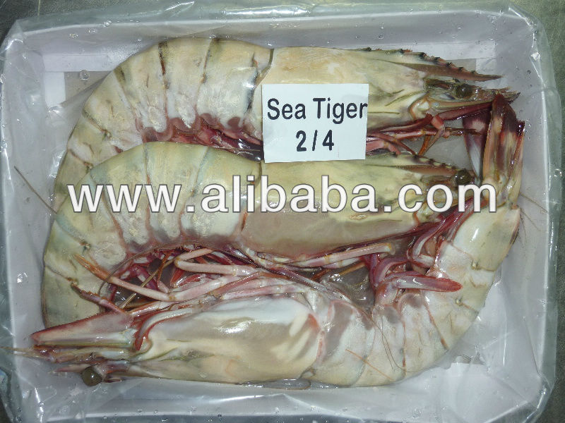 Sea Tiger Prawn