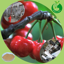 Best Vitamin c from natural Acerola Cherry Powder