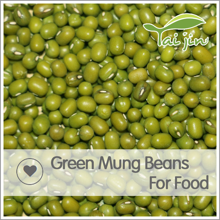 good quality hot sale green mung bean