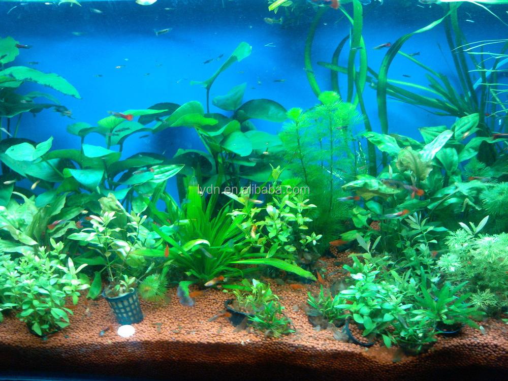 aquaponics growing media clay pebbles for aquarium plants