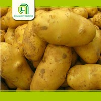 importers in dubai of potato purchase specification