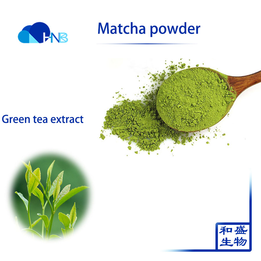 Natural green tea extract water soble Matcha Powder for food supplement use