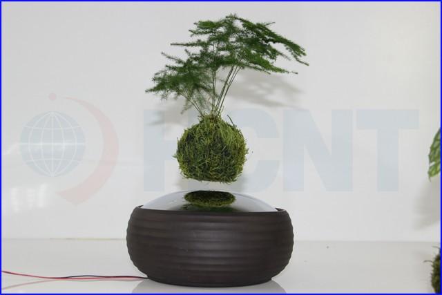 Floating levitating plant pot magnetic floating real plant for Levitating plant