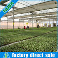 Agriculture Multi-Span Greenhouse Equipment