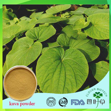 100% nature pure kava kava seeds , kava root extract powder with free sample