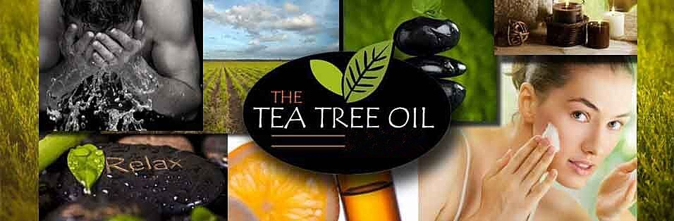 Wholesale 100% Pure Wholesale Tea Tree Oil For Acne Scars Uses Bulk