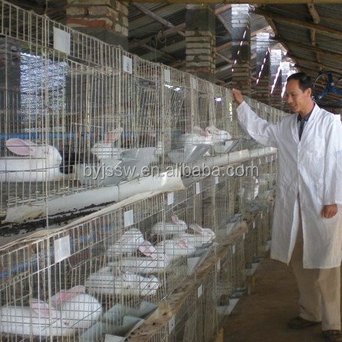 Commercial Rabbit Farming In Kenya Farms For Delivery