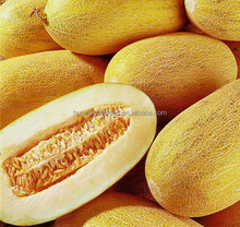 Hybrid Sweet Melon seeds Hami Melon Seeds For Planting