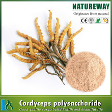 100% natural High Quality Yarsagumba Extract Cordyceps Sinensis