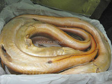 frozen gaint yellow conger eel export