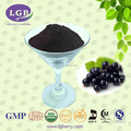 Top quality black currant anthocyanin
