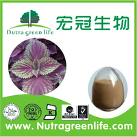 Perilla frutescens (L.) brltt./100% Pure Natural Perilla Leaf Powder 40%/Dried Perilla Leaf Extract, Perillae Folium Extract, Fo