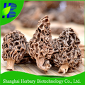High quality rare edible mushroom, morel mushrooms for sale