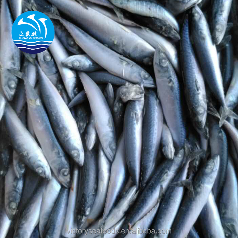 Hot Sale Seafood Frozen Whole Round Pacific Fish Mackerel for Canned food