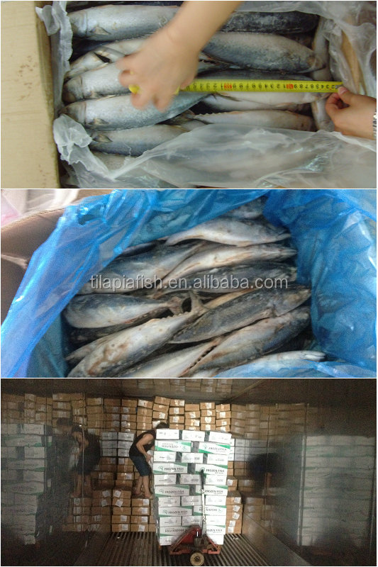 Fresh frozen fish sale