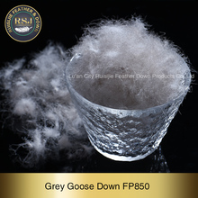 High quality grey goose down feather for sofa/duvet/ jackets/pillow For sale