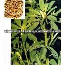 High quantity Fenugreek extract/Fenugreek extract powder/fenugreek oil