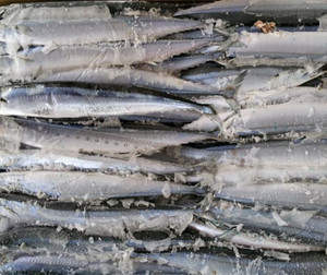 Fresh Frozen Fish Saury Fish Pacific Saury