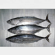 Well Selling Sea Frozen Fish Bighead Carp Bonito in Good Quality