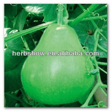 Productive Bottle Gourd Seeds For Sale