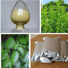 100% natural nettle leaf powder extract for sale