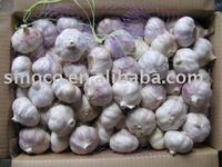 Fresh White Garlic China (Pure White)