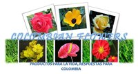 Guide Colombian flower exports