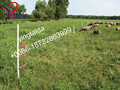 2015 hot sale professional cattle electric fence for farm