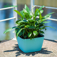 Square Rattan Planter Pot Colorful Rattan