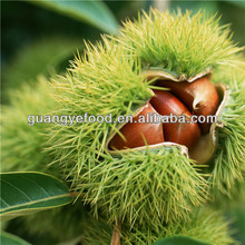 chinese organic roasted chestnuts for sale