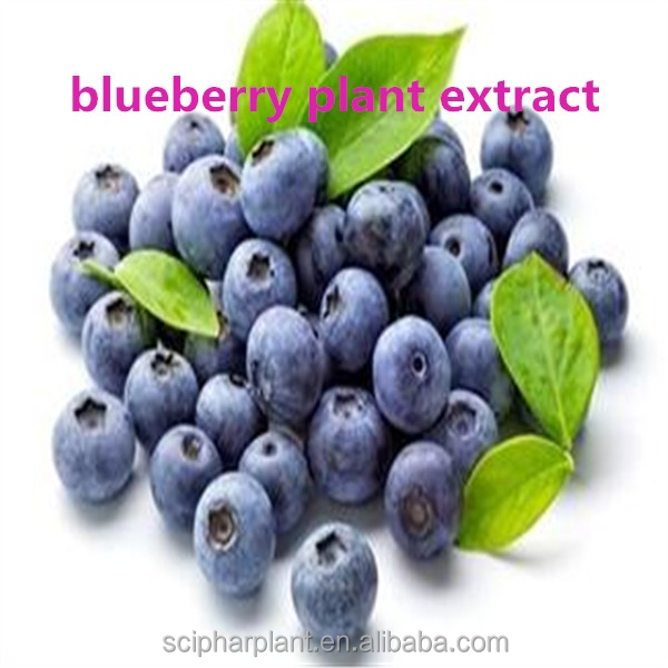 Hot sale blueberry/bilberry plant extract