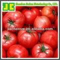 100% Natural Plant Extract lycopene tomato pigment