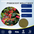 Natural Pubescent Holly Root Extract