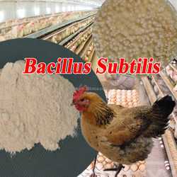 Reasonable Price Animal Feed Addtive Aqua Probiotic Bacillus Subtilis