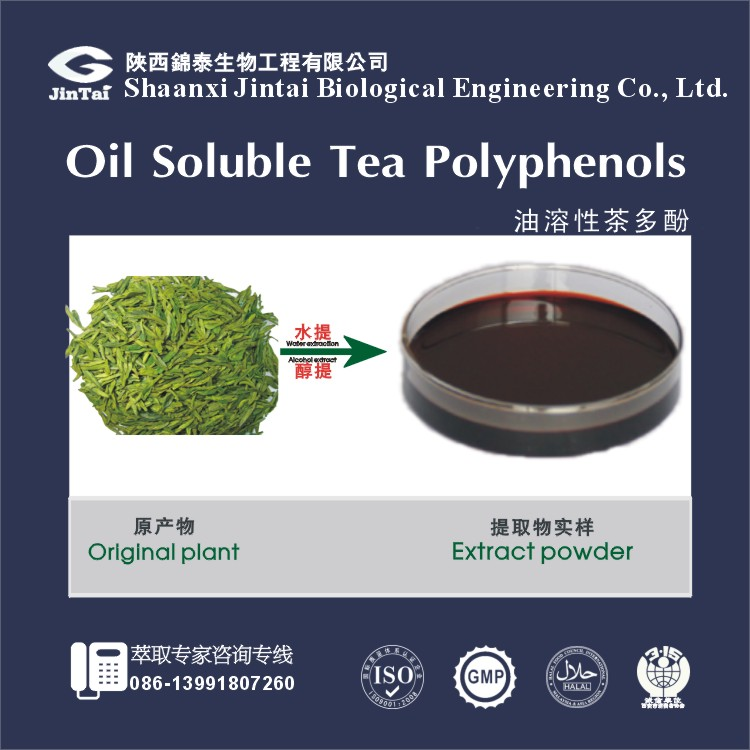 factory supply 90% 98% oil soluble green tea extract