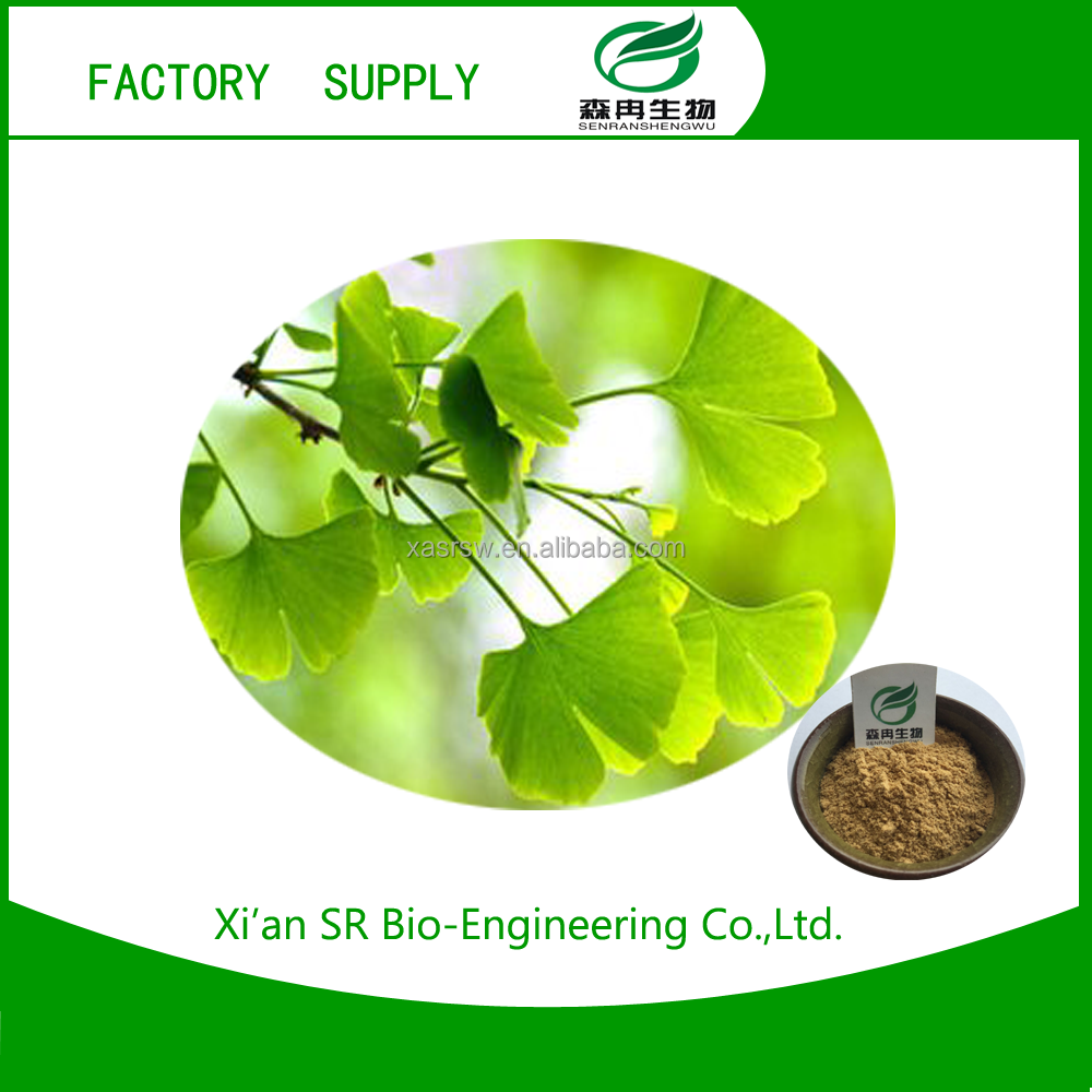Good price of natural ginkgo biloba leaf extract With Long-term Service