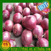 /product-detail/red-onion-grade-aa-chinese-onion-supplier-60467172746.html