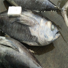 Whole yellowfin tuna frozen yellowfin tuna saku