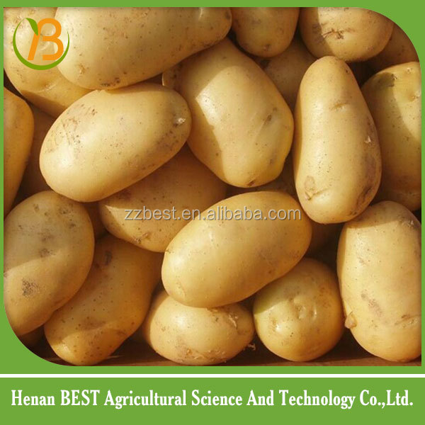 Organic Fresh Potato in Cheap Price 2016