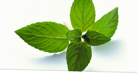 Peppermint Oil& flavours and fragrances
