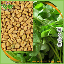 High quality Free Sample 100% Natural 4-Hydroxyisoleucine Fenugreek Seed Extract