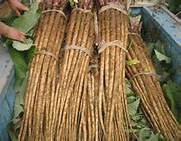 fresh yellow burdock root/100% Pure Natural Burdock Extract/Burdock Extract powder/fresh burdock