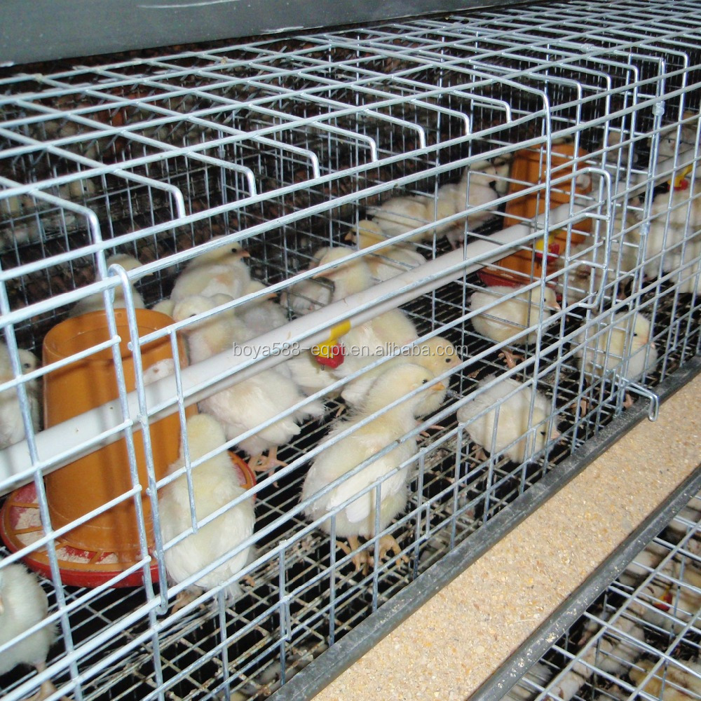 poultry farm broiler layer baby chicken cages