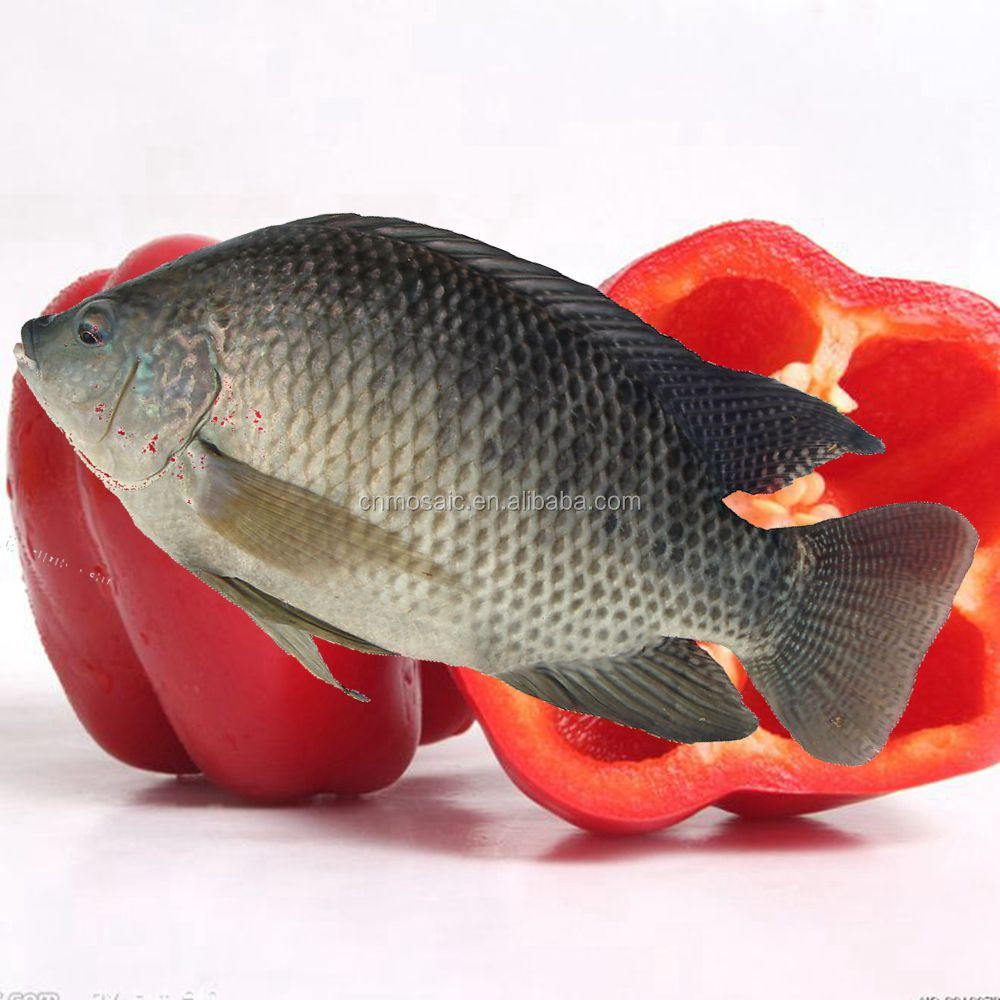 Frozen red and black tilapia for sale