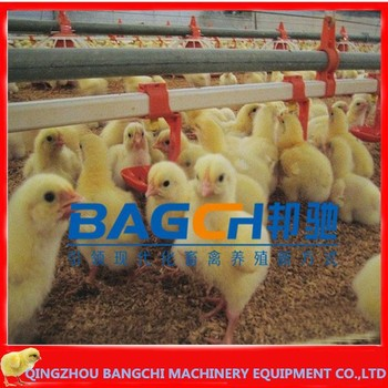 Automatic Chicken Nipple drinking system for broiler and breeder