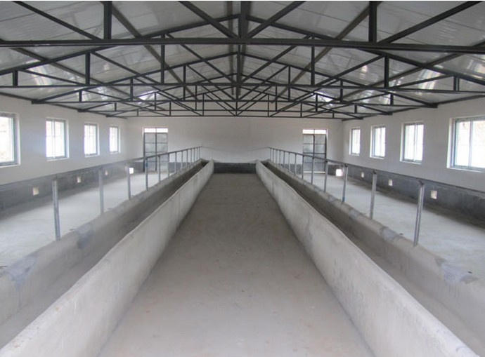 prefabricated steel structure cowshed